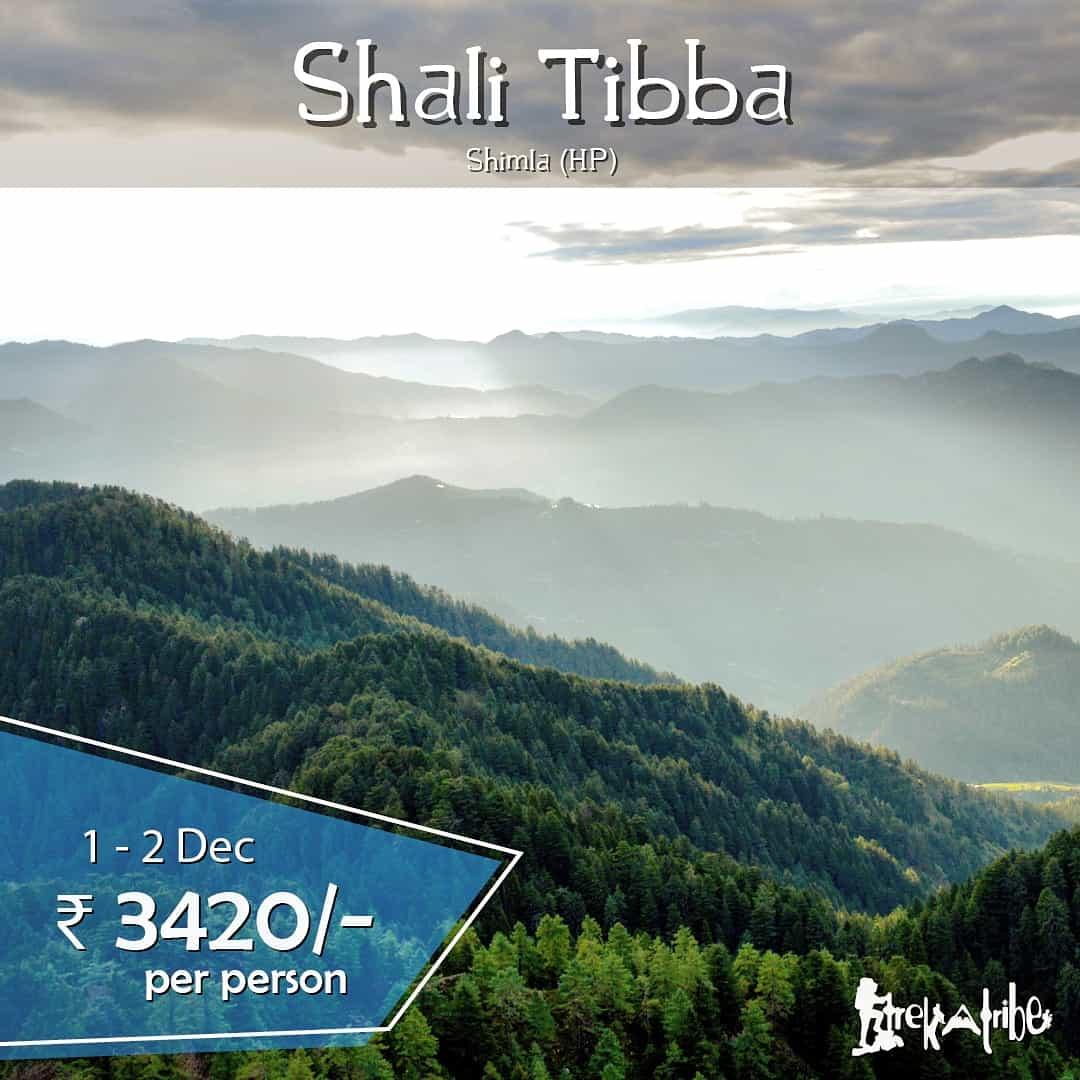 Shali Tibba trek shimla