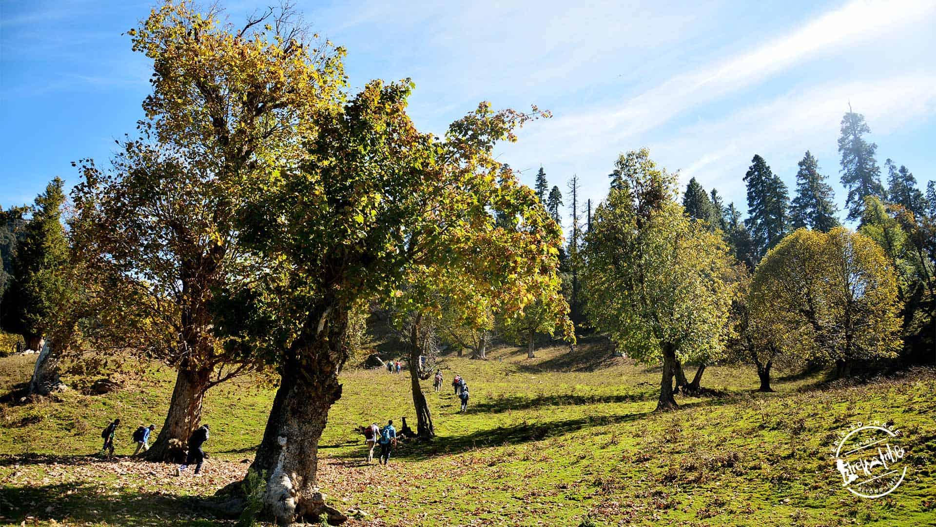 Chandrakhani pass Trekking Trail