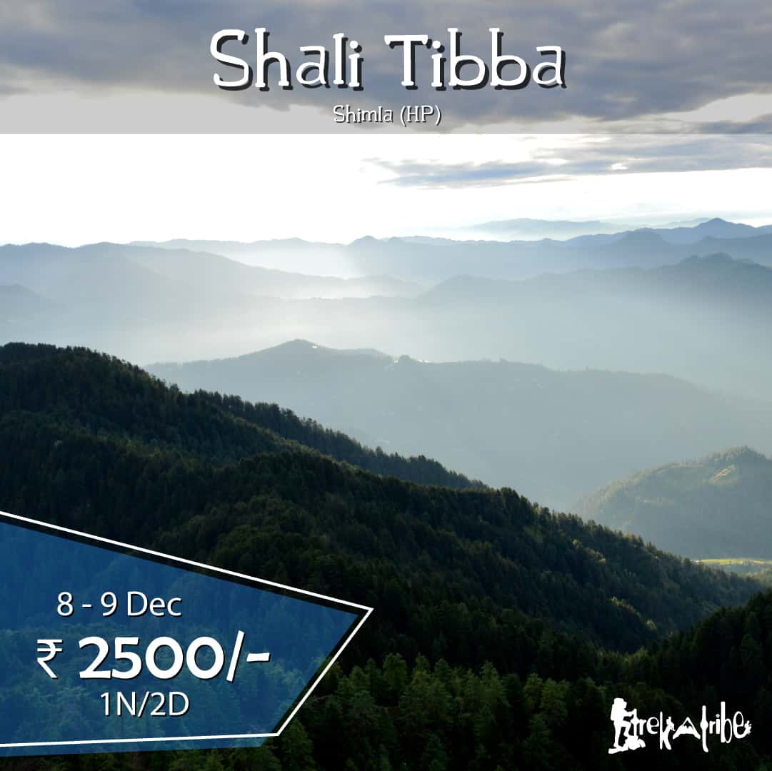 Shali Tibba trek - trekking in shimla