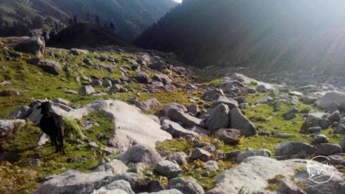 Indrahar Pass Trekking