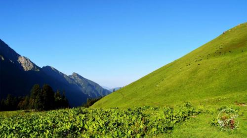 Chandernahan Lake Trek - Himalayan Grasslands