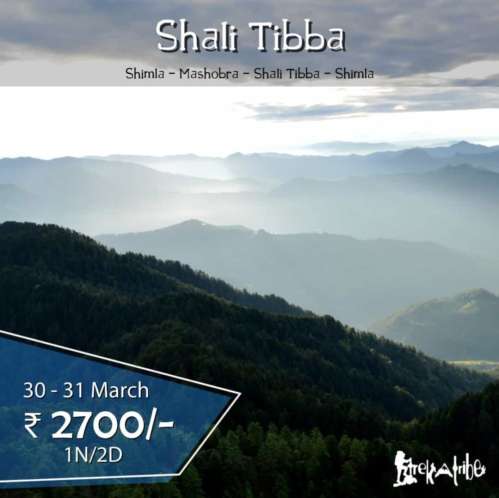 Shali Tibba Trek- Trekking in Shimla