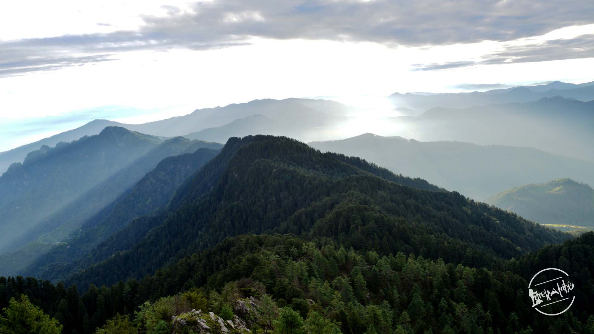 View of dense deodar forest from Shali tibba