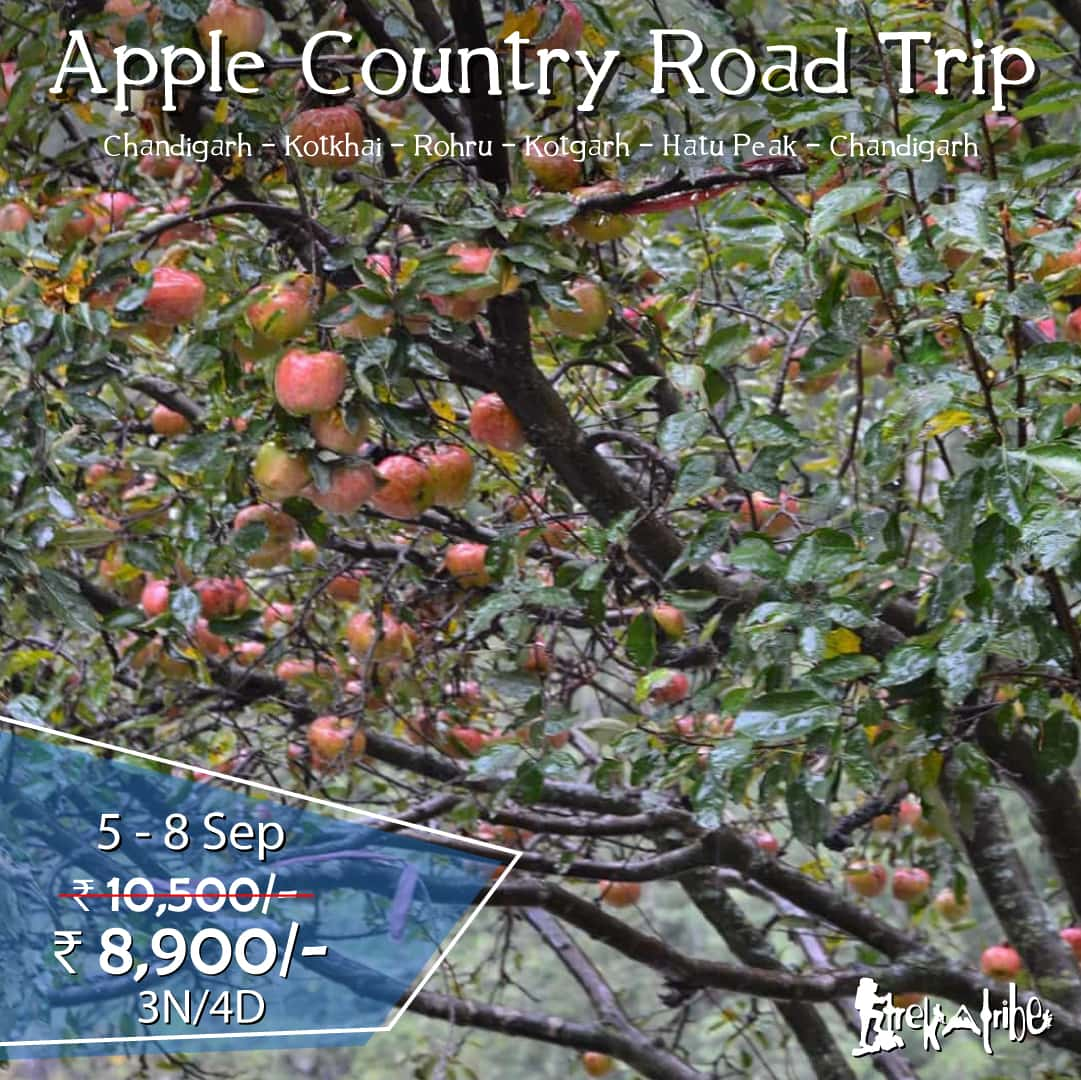Apple Country Road Trip shimla district kotgarh