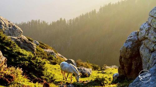 Horse in the woods en-route Churdhar Trek