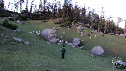 En-route Churdhar Trek