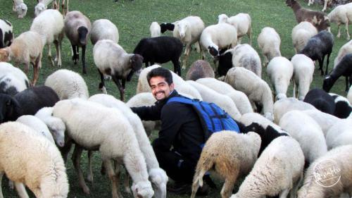 En-route Churdhar Trek - Herd of sheep