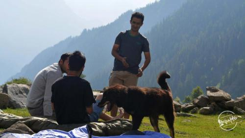 Himalayan Gaddi Dog