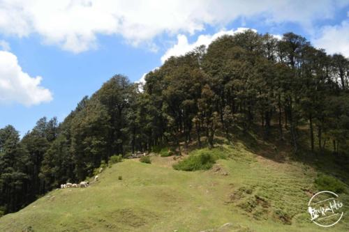 Tirthan Valley (10)