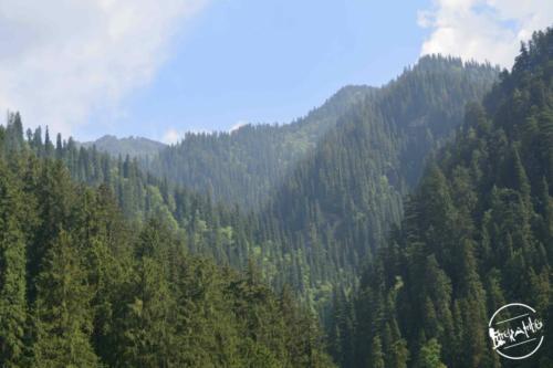 Tirthan Valley (27)