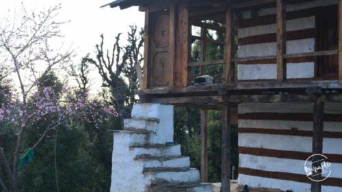 thachi valley mandi, himachal (30)