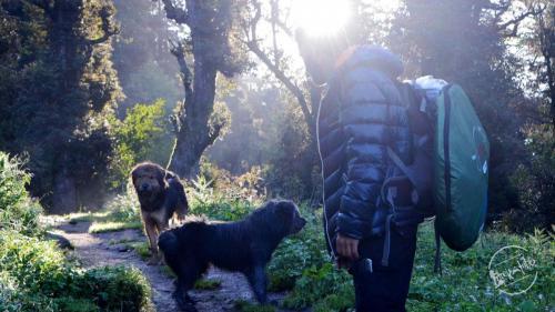 Trek To Chandernahan Lake  with Gaddi Dog - Himalayan Sheepdog
