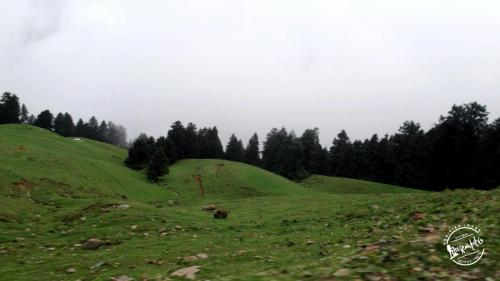 Pine Forest At Prashar Lake