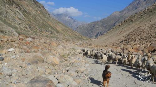 Road Trip to Kinnaur Spiti (31)