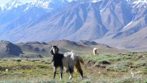 Road Trip to Kinnaur Spiti (52)